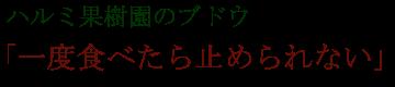 ハルミ果樹園のブドウ